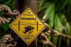 Warning ! (Air'Vé) Tags: fish france color warning 50mm nikon larochelle attention poisson couleur piranha d600 aquairum poitoucharentes nikonpassion