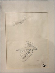 PAN_AM_FOTO_1361 (M HKA Archives) Tags: art fly sketch photo leaf model foto drawing archive falling 1981 antwerp mechanism antwerpen calculation fokker archief tekening muhka schets panamarenko berekening vliegmechanisme