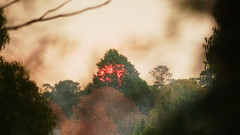 fire tree (christinemargaretlynch) Tags: sunset haze hazelbrook burnoff contro