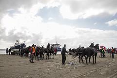 2016-Ameland038 (Trudy Lamers) Tags: wadden ameland eiland paarden reddingsboot reddingsactie