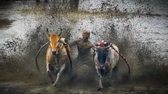 32_20160315-171435-_DSC5566_HDR_Fei (trueforever) Tags: indonesia ibis bukittinggi padang novotel pagaruyung minangkabau jamgadang lembahharau westsumatera batusangkar tanahdatar ngaraisianok padangpanjang pacujawi padangpariaman