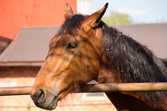 Shadowed (Yvonne L Sweden) Tags: horse spring sweden may maj hst taxinge 3662016