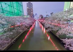 Meguro Sakura (Mikedie1) Tags: japan river tokyo spring sigma wideangle  cherryblossom  sakura  1020mm fluss meguro dri hdr frhling tokio  10mm kirschblte