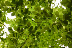 Light behind the leaves (Maria Eklind) Tags: trees light nature leaves se leaf skåne europe sweden bokeh outdoor sverige malmö ljus löv skånelän rönneholmsparken