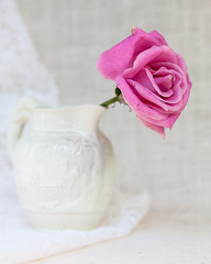 Rose with Wedgwood Vase (ocanannain) Tags: flowers stilllife macro rose closeup vase softfocus wedgwood s2f tabletopphotography kimklassen s2fclass