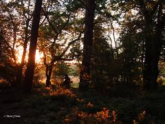 Dawn Chorus walk  M6251149sm (Preselector) Tags: suttoncoldfield suttonpark bioblitz