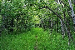 Landscape Wildlife & Nature Tranquility Outdoors Grass Forestwalk Calming Trees Forest Trail Forest Trails Wooded Area Wooded Path Pathway Walkway (Shannon F Gorman) Tags: trees grass forest landscape outdoors calming tranquility trail walkway pathway wildlifenature forestwalk woodedarea woodedpath foresttrails