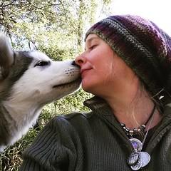 Buddy kisses (ameliabeare) Tags: dog puppy malamute smooch alaskanmalamute