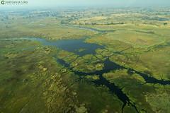 15-09-20 Ruta Okavango Botswana (93) R01 (Nikobo3) Tags: travel parque paisajes naturaleza color canon ngc delta unesco viajes botswana okavango vuelo twop frica vidasalvaje g7x omot deltadelokavango flickrtravelaward canong7x nikobo josgarcacobo todosloscomentarios