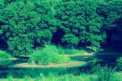 2Yamada Pond Park (anglo10) Tags: japan