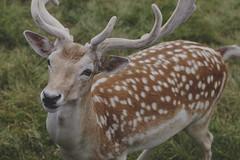 IMG_7769 (TheFreckledFrenzy) Tags: sigma art lens f14 dof zoo lake tobias wildlife park laketobias wild life safari animals naturallight matte