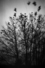 Smena Symbol - Ravens (Kojotisko) Tags: bw vintage crossprocess brno cc creativecommons vintagecamera czechrepublic smena smenasymbol