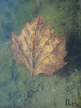 Hauntingly (nette.starin) Tags: water leaf eerie spooky hauntingly