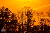Fiery sunset (The Suss-Man (Mike)) Tags: trees sunset nature silhouette georgia gainesville newyearseve lakelanier hallcounty thesussman sonyalphadslra550 sussmanimaging