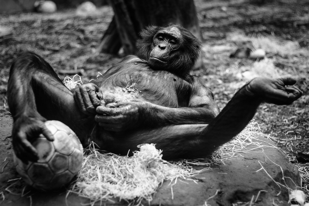 The Worlds Best Photos Of Monkey And Penis - Flickr Hive Mind-1131