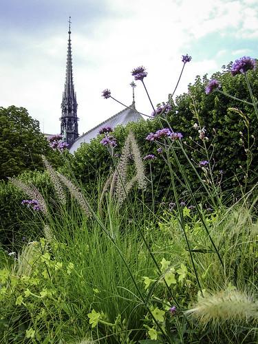 Kierunek Katedra Notre Dame