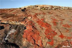 Nama 14 327 (Brian Preen) Tags: rocks granite lichen precambrian namaqualand