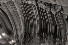 Whales teeth (steven.kemp) Tags: london whale bone kensington naturalhistorymuseum