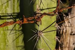 F20140202_173156_q02 (Fabiano Zig) Tags: brasil bicicleta cato expedição cordilheira arame farpado serradoespinhaço fabianoziggmailcom
