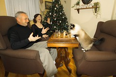 Checkmate! (mikie t) Tags: christmas family game silly cat fun funny flash wide chess gimp sigma1020 catplayingchess