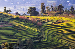 Terraced Fields, Nagarkot, Nepal (Feng Wei Photography) Tags: travel nepal terrain house color beautiful horizontal rural trek landscape colorful asia village terrace outdoor scenic peaceful nepalese np kathmanduvalley nagarkot argiculture bagmati terracefield sankhu newar centralregion