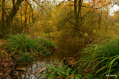 Autumnal view of woodland pool (williamrandle) Tags: trees green water pool woodland landscape pond nikon mystical blackcountry d7100 sandwellvalleypark sigma1835f18art westbromwish