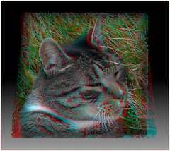 Shady's Sleepy Head 1 - Anaglyph 3D (DarkOnus) Tags: closeup cat lumix 3d feline head pennsylvania anaglyph sleepy buckscounty redcyan shadys dmcfz35