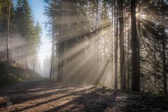 Rax Nebelgrenze