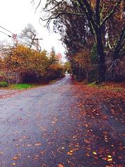 Fall and the rain 😍☁️ #photography #fall #rain #sopretty (brinksphotos) Tags: fall rain photography sopretty