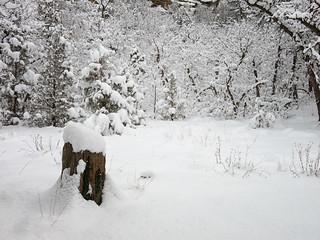 snow at Dalla