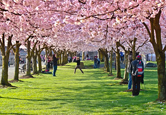 Picture Time. (Omygodtom) Tags: park pink shadow portrait abstract flower tree green art texture nature composition contrast yahoo google nikon flickr dof natural bokeh explorer perspective exotic shade existinglight tamron bing facebook tamron90mm japanesecherrytrees d7000