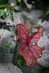 "Leaf • <a style=""font-size:0.8em;"" href=""http://www.flickr.com/photos/92159645@N05/16047541628/"" target=""_blank"">View on Flickr</a>"