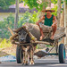 At The Countryside: Traditional Farm Carriage