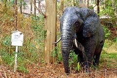 The Iron Elephant : 鉄の象 (Dakiny) Tags: park winter sculpture elephant art animal statue japan zoo photo object sony january sunny cybershot photograph yokohama kanagawa kanazawa africanelephant carlzeiss 2015 variosonnar animalphoto rx100 kanazawazoo kanazawapark kanazawaward dscrx100 sonycybershotdscrx100