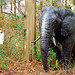 The Iron Elephant : 鉄の象