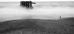 Svema Micrat-Orto - Test Roll 2 - Fifty Point Conservation Area (Alex Luyckx) Tags: park bw ontario canada film blackwhite kodak hamilton 11 slidefilm lakeontario mcc greenspace grimsby xtol filmphotography fpp svema filmisalive fiftypointconservationarea fiftypoint miltoncameraclub filmphotographyproject filmphotographpodcast believeinfilm svemamicratorto asa075 fppsuperpositiveslidefilm