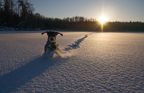 backlight snow dog