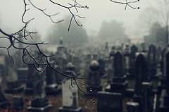 Foggy Cemetery (moke076) Tags: atlanta winter mist tree water cemetery grave weather georgia oakland nikon focus branch dof web headstone spiderweb foggy graves spooky drip gravestone droplet d7000