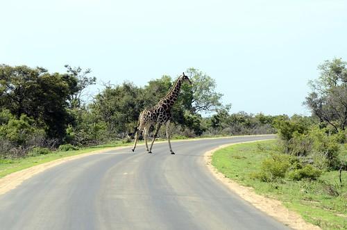Südafrika 09-2014 (563)