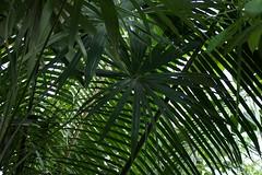Lines (JenGallardo) Tags: nyc newyorkcity plants newyork leaves bronx nybg newyorkbotanicalgarden bronxbotanicalgarden