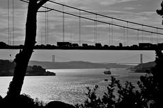 Fatih Sultan Mehmet Bridge in stanbul (ilmikadim) Tags: bridge sea blackandwhite bw seascape black tree car turkey landscape traffic outdoor istanbul bosphorus