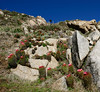 1 Neoporteria subgibbosa (Umadeave) Tags: chile cactus montagne plante flora chili desert flore eriosyce subgibbosa neoporteria