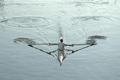 Piccoli canottieri crescono. Milano, 2016.05.27 19.04 (Sgt. Pepper57) Tags: milan water milano acqua naviglio canottieri nikonflickraward