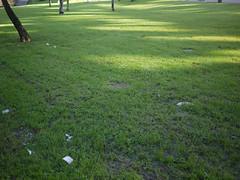 111215 (Jusotil_1943) Tags: icg111215 verde green human basura troncos
