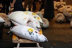 IMG_5878 (tsaaby) Tags: japan fishmarket fisk fiskemarked tmfstudietur