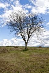 Albero cuore (DarioMarulli) Tags: trees heart albero cuore abruzzo laquila
