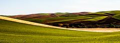 Marbled (Culinary Fool) Tags: wheat usa washington crop lentils 2016 roadtrip crops rollinghills wa brendajpederson travel palouse photography fields culinaryfool farm ranch may hills travelwa 2470mm28