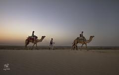 two camels (manuj mehta) Tags: travel sunset people india sand desert dunes incredible camels nomads rajasthan