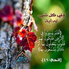 31 (ar.islamkingdom) Tags: الله ، مكان القلب الايمان مكتبة أسماء المؤمنين اسماء بالله، الحسنى، الكتب، اسماءالله
