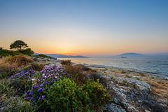 Wild Bay on Zakynthos (krugli) Tags: travel flowers sea panorama seascape nature landscape island greek coast bush rocks angle blossom outdoor stones horizon wide rocky panoramic greece coastline zante seaview zakynthos ionian d600
